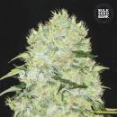 Bulk Seed Bank - Bubblegum Extra