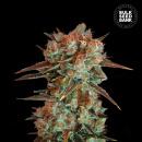 Bulk Seed Bank - Caramel King