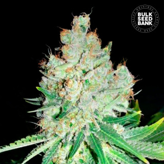 Bulk Seed Bank - Cheese