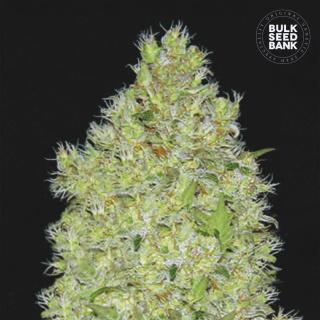 Bulk Seed Bank - Chronical