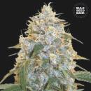 Bulk Seed Bank - Cocopopo