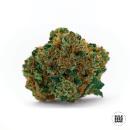 Bulk Seed Bank - Grapefruit