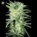 Bulk Seed Bank - K2