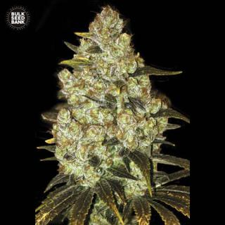 Bulk Seed Bank - Psychedelic