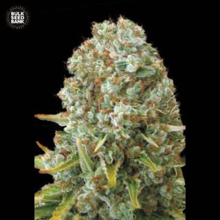 Bulk Seed Bank - Moby Big