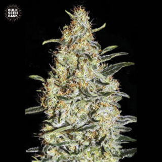 Bulk Seed Bank - News Haze