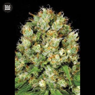 Bulk Seed Bank - Sour Diesel