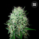 Bulk Seed Bank - Auto Devils Kiss 5er Packung...