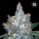 Bulk Seed Bank - Auto Blueberry Berry 5er Packung...