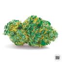 Bulk Seed Bank - Auto Sweet Tooth