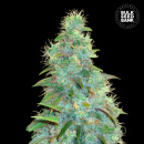 Bulk Seed Bank - Auto Sweet Tooth 5er Packung...