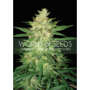 WOS Sweet Coffee Ryder AUTO Seeds Autoflowering...