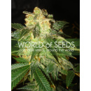WOS Pakistan Ryder Seeds AUTO Autoflowering Collection...