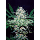 WOS Pakistan Valley Seeds Pure Origin Collection Seeds 7er
