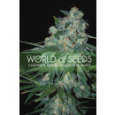 WOS Ketama Seeds Pure Origin Collection Seeds 7er