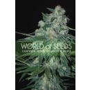 WOS Ketama Seeds Pure Origin Collection Seeds 3er