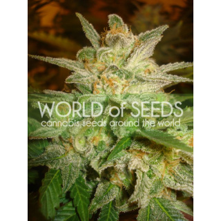 WOS Star 47 Seeds Legend Collection Seeds