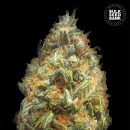Bulk Seed Bank - Auto Original Orange Bud 10er Packung...