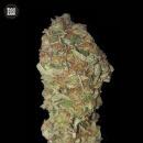 Bulk Seed Bank - Green Candy