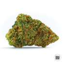 Bulk Seed Bank - Auto Psychedelic 1000er Packung auto-feminisiert