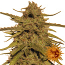 Barneys Farm Pineapple Haze Seeds 10er regulär