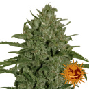 Barneys Farm Triple Cheese Seeds 5er