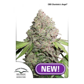 Dutch Passion CBD Charlottes Angel Seeds