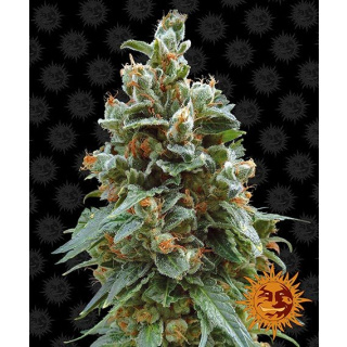 Barneys Farm Vanilla Kush Seeds 5er