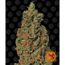 Barneys Farm Red Diesel Seeds 5er